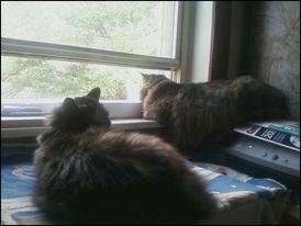 windowsill_kitties