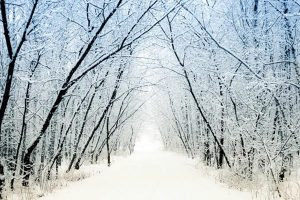 A Mother's Winter Musings